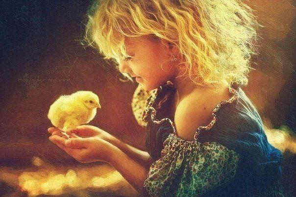 какую породу кур выбрать купить легбар орпингтон яйцо купить инкубационное яйцо легбар орпингтон курица несушка цыплята домашняя птица содержание стандарт купить продажа